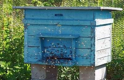Магазин - Пчеловодство. Купить ульи. Продажа ульев. Цена