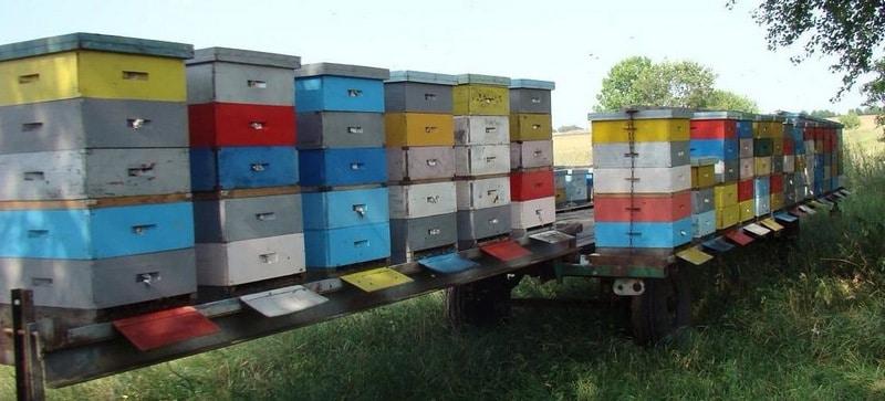Кочевая пасека из ульев на 145-ю рамку